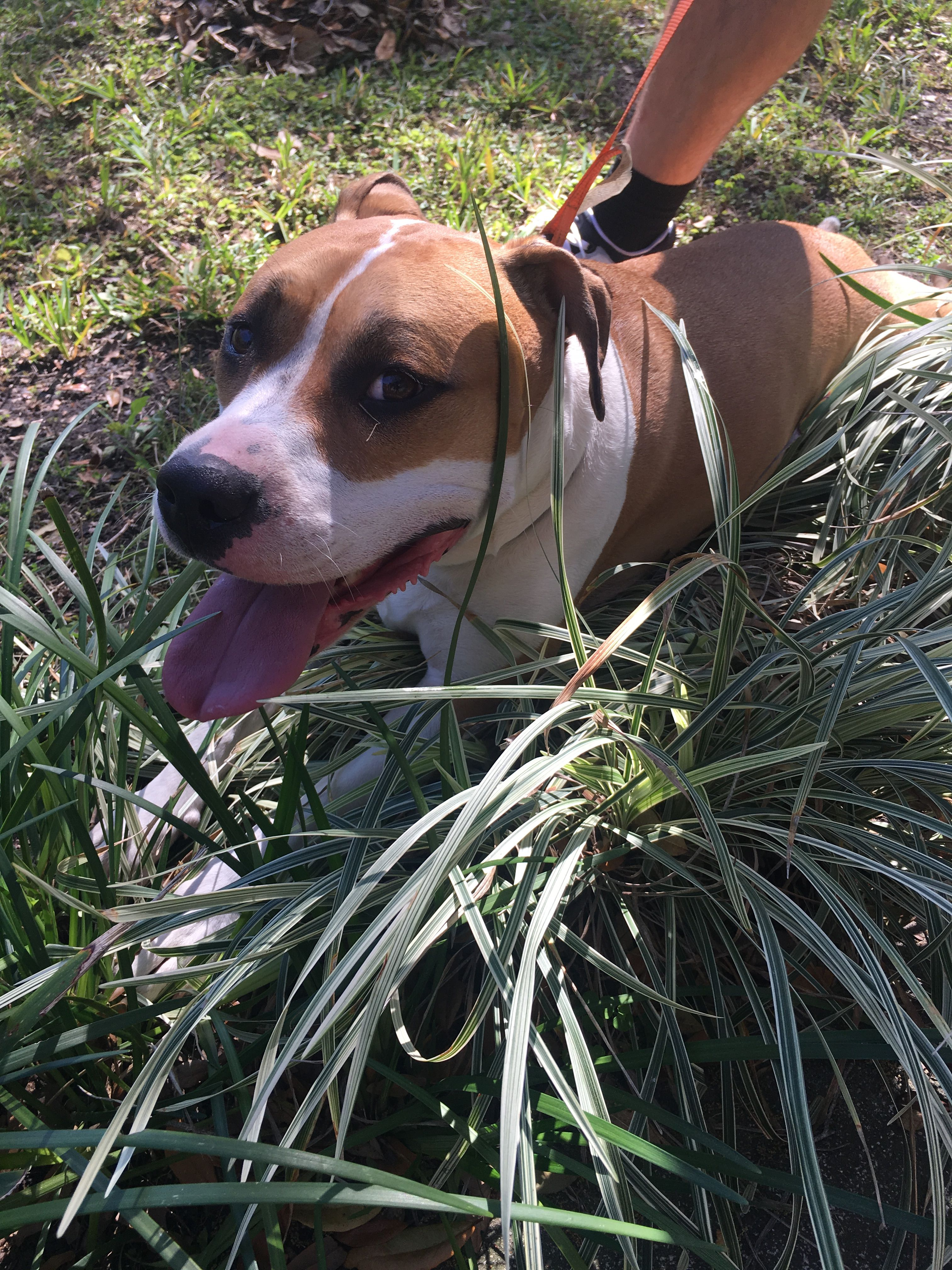 Pin by Found Lost Dogs on Found Dog Jacksonville florida