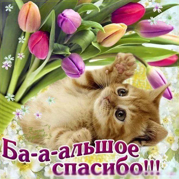 Spasibo Za Lajki I Kommentarii Horoshego Dnya I Produktivnoj Nedeli Birthday Hamster Happy Birthday