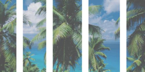 Pale Grunge Tumblr | Palm Tree Tumblr Header | tumblr ... Palm Trees Backgrounds Tumblr
