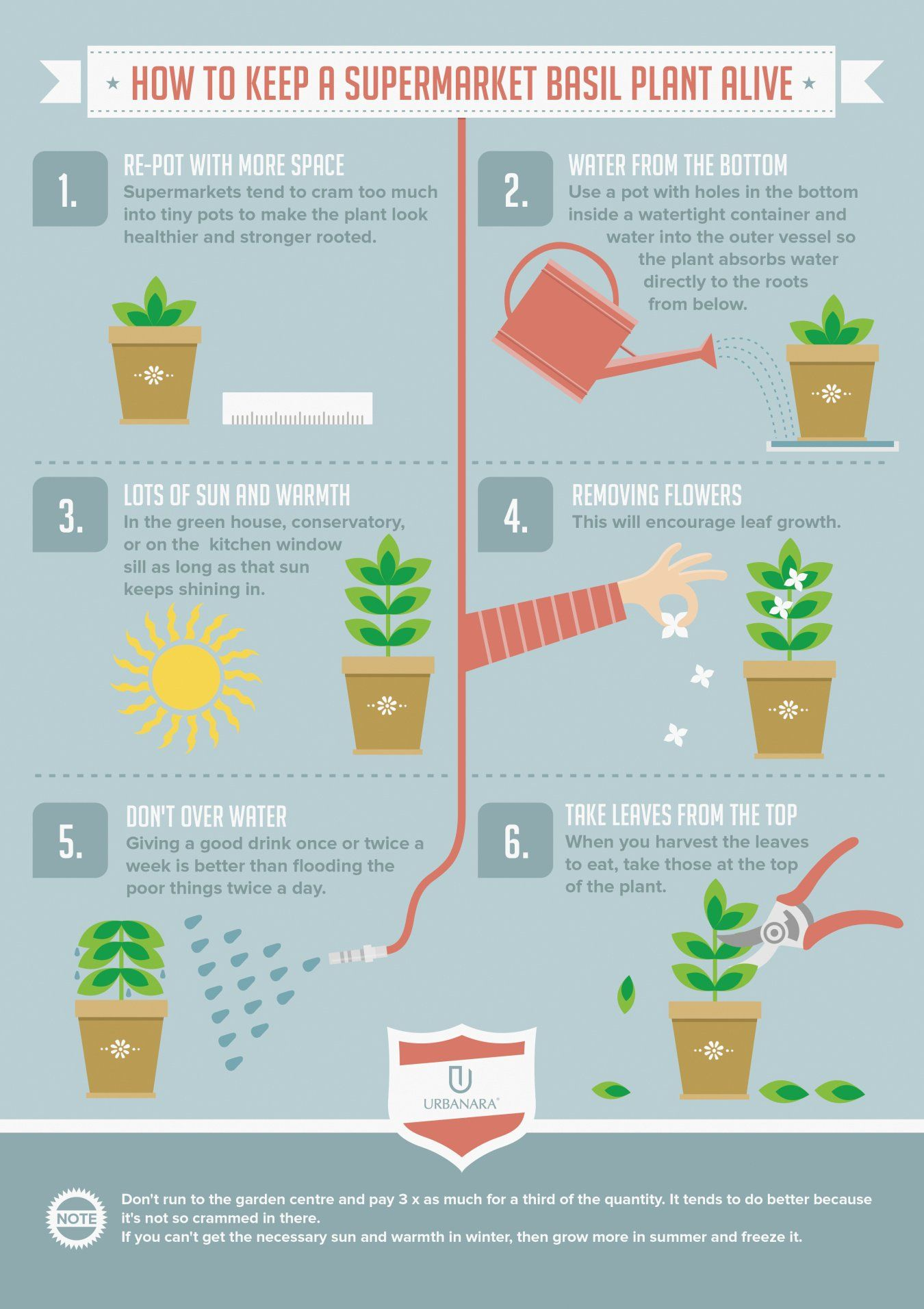 infographic about how to take care of a basil plant alive back
