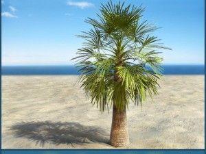 Palm 7 Plants 3d Model Garden