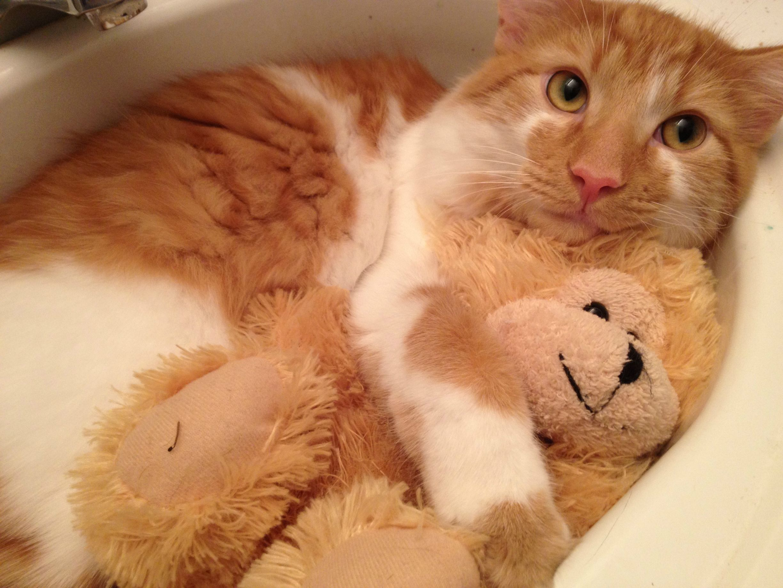 Cute Teddy Bears Tumblr Wallpaper Cats Animals Kitty