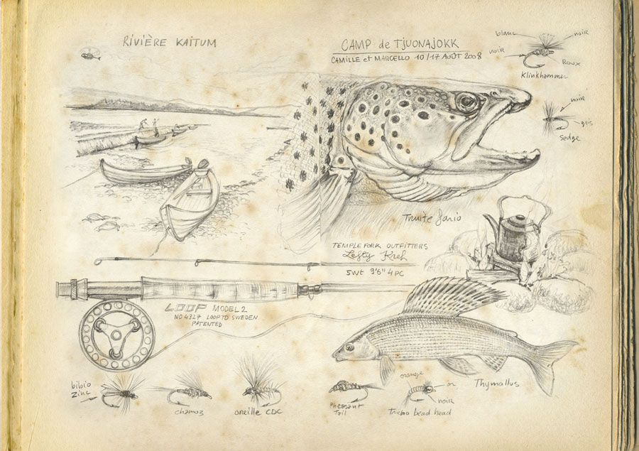 Marcello pettineo marcello pettineo pinterest p che - Croquis poisson ...