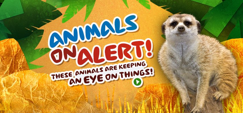 San Diego Zoo - Kids: games, activiities, videos, etc