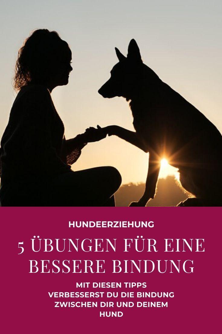 5 Alltagsubungen Fur Eine Bessere Bindung Zu Deinem Hund Hunde Hunde Korpersprache Hundchen Ubung