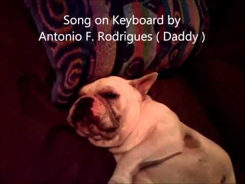 French Bulldog Nap Time Filmed By Antonio F Rodrigues Jr