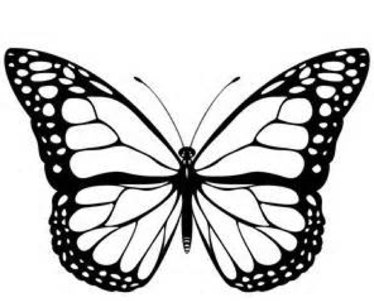 Print coloring page and book, monarch-butterfly-coloring