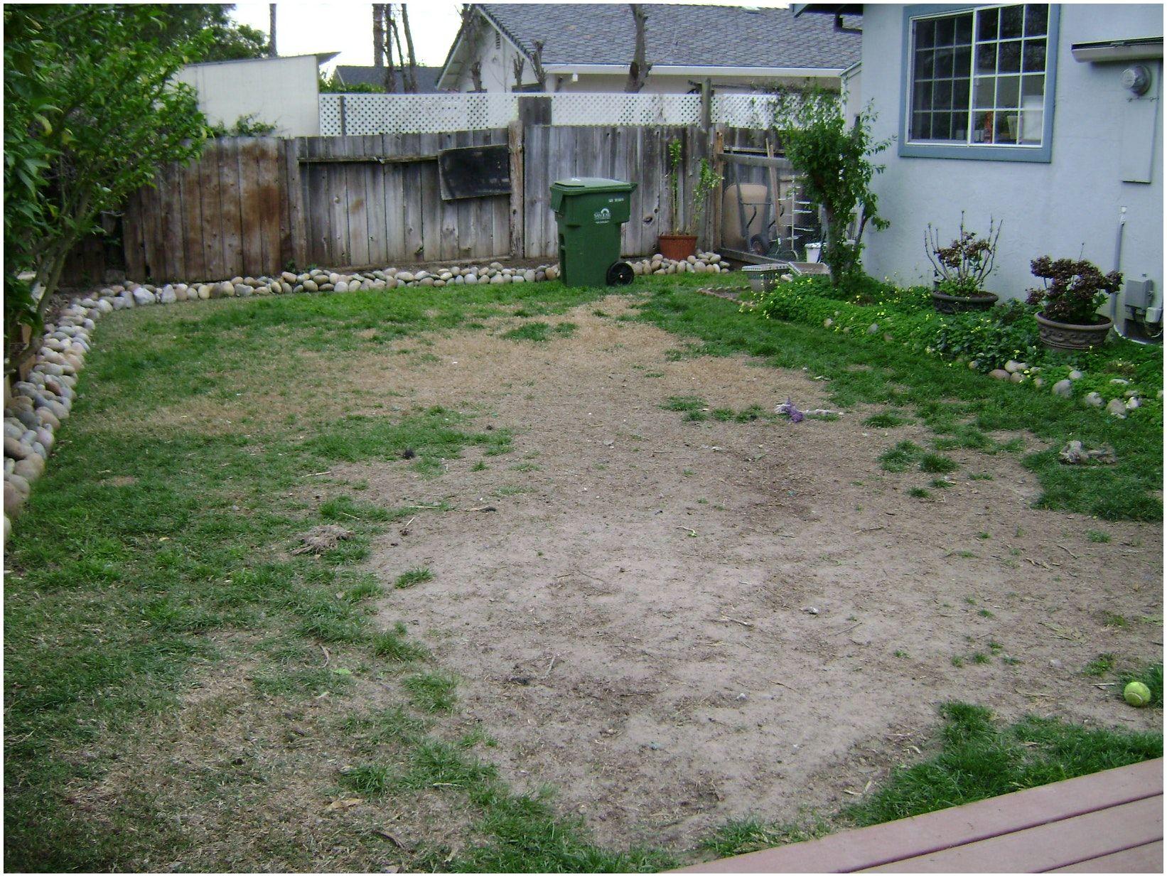 Backyards : Wonderful Cheap Backyard Ideas Dog Friendly ...