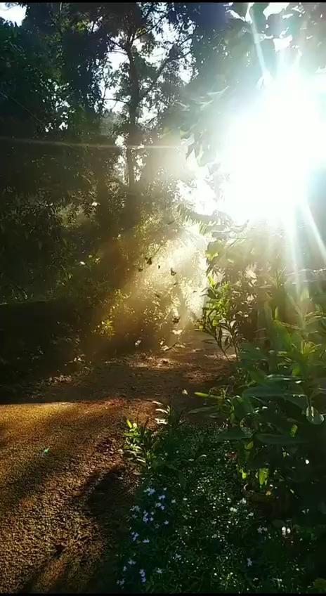 Fantastic morning, in Periyar national Park, India