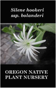 Oregon Native Plant Nursery Woodburn Specializing In Wild Seed Propagated Plants Of Uncommonly Beautiful Bulbs And Perennials From