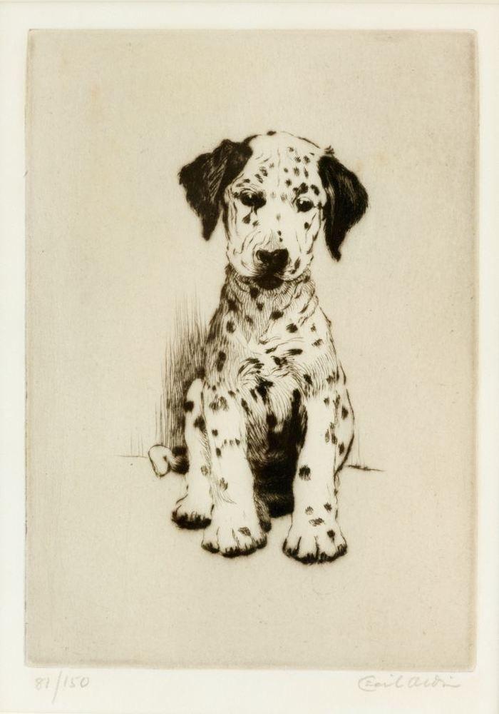 Loopy The Dalmatian Puppy Cecil Aldin Circa 1935 Fine Art
