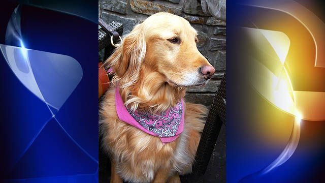 Longlost retriever reunited with family after 20 months
