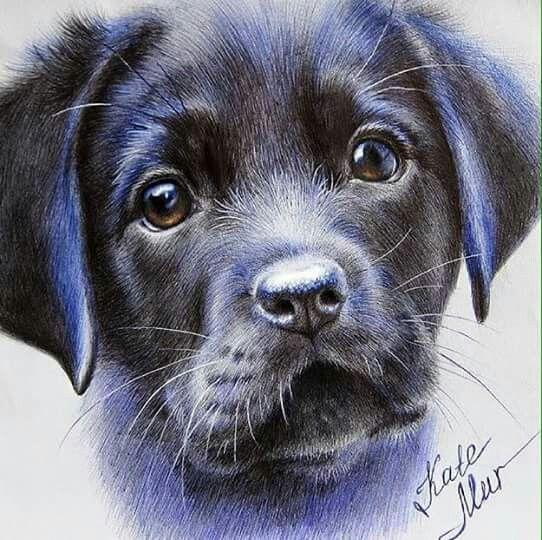 Esta Hermoso Dibujos De Animales Realistas Dibujos De