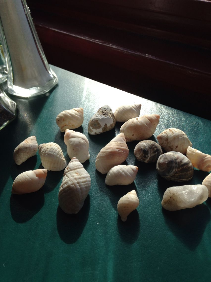Shells I found in Maine