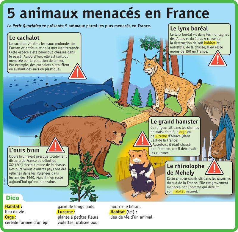 Tics En Fle Environnement Climat Dossier De Ressources Animaux Menaces Documentaire Animalier Documentaire Animaux