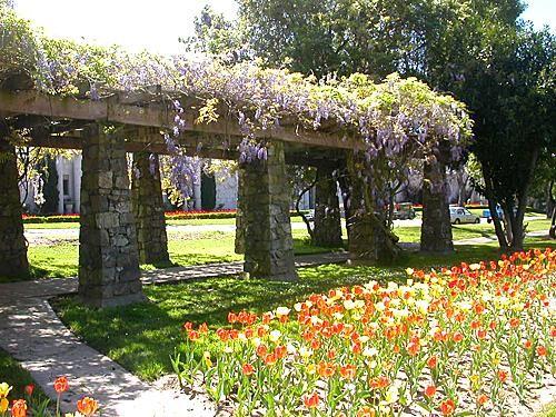 Wisteria Arbor Plans Oakland Cemetery Wisteria Trellis Arbor Garden Spring Tulips Wisteria Trellis Wisteria Arbor Spring Tulips