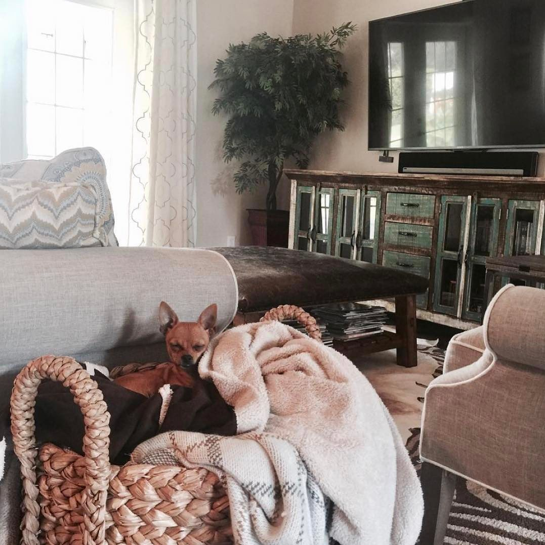 """Here is a little game we like to call """"spot the pbpet"""