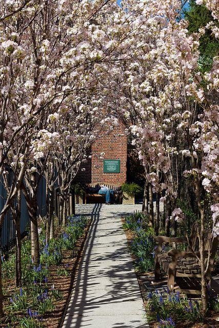 Garden St Luke in the FieldsWest VillageBenchesNYC