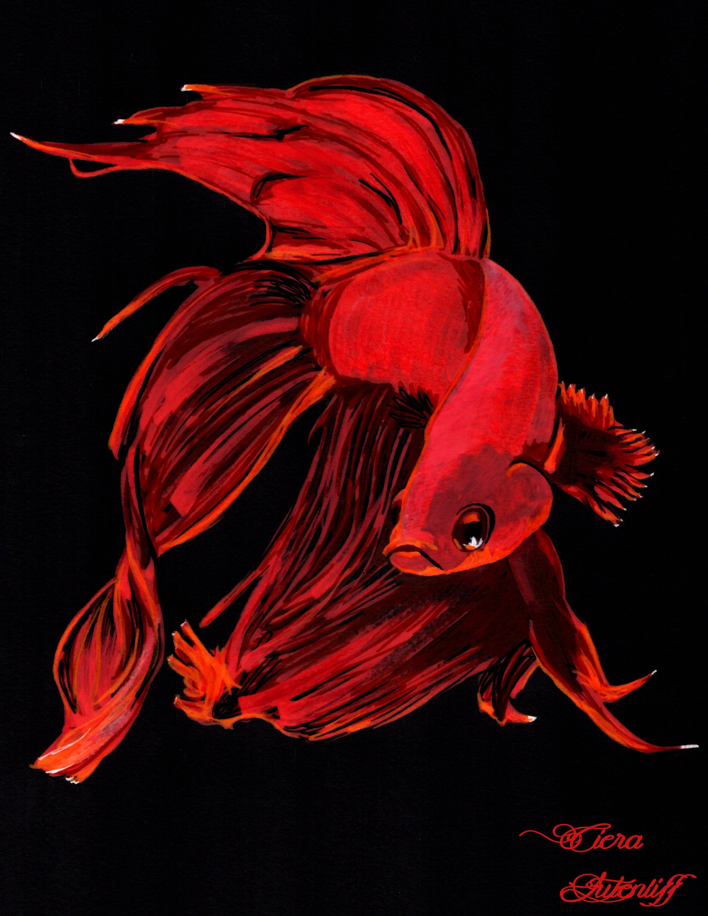 Dessin combattant poisson rouge red fish poscas drawing blabackground dessins la mine - Poissons dessin ...