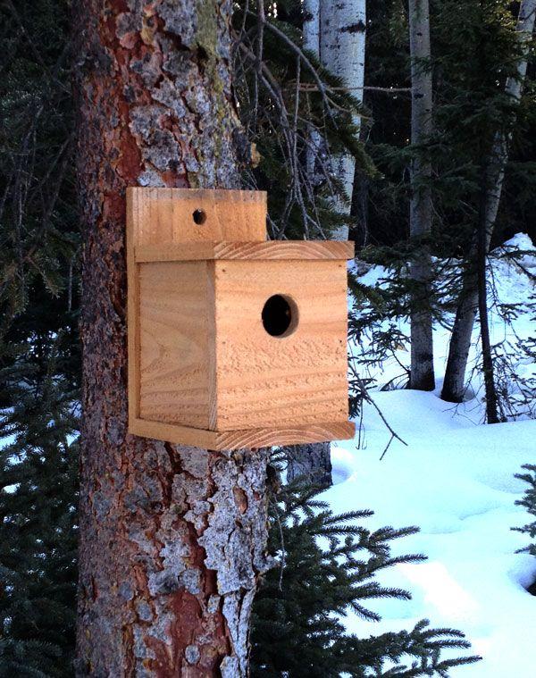 $1 Modern Cedar Birdhouse