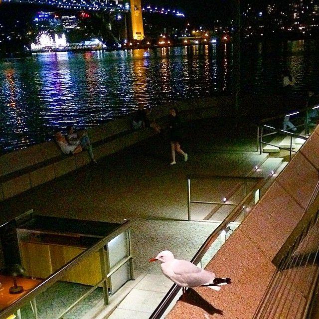 Luna Park and a solitary seagull . @pierceartdesign  #seagull #solitary #lunapark #funpark #sydneyharbourbridge #operahouse #sydney #sydneyforeshore #lonebird #sydneynightlife #sydneyartist #australianart #australia #art #paintings #inspo  #fishandchips @trafficjamgalleries by pierceartdesign http://ift.tt/1NRMbNv