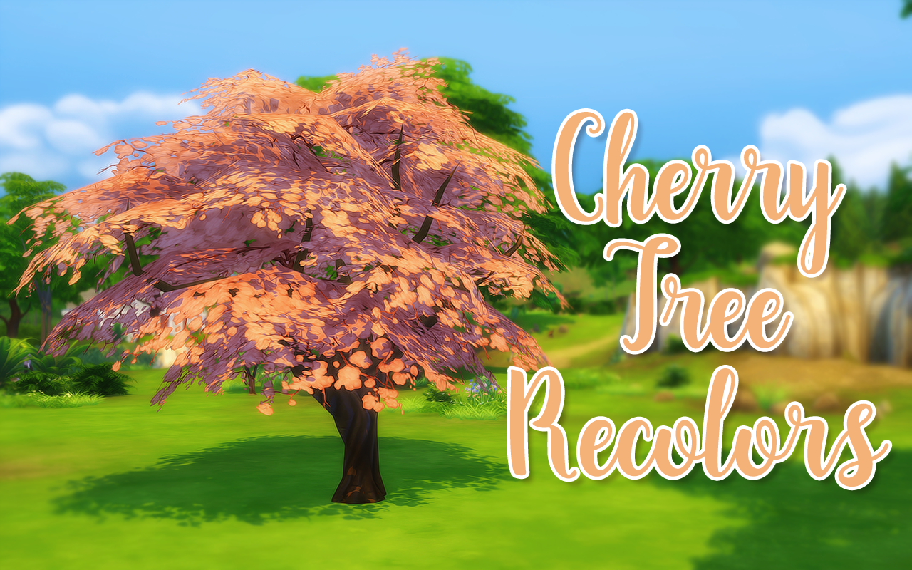 Cherry Tree Berry Recolorswhy I Don T Know S4s Hasn T Updated Yet And While I Was Taking Some Photos I Was Thinking About How Cherry Tree Sakura Tree Sims