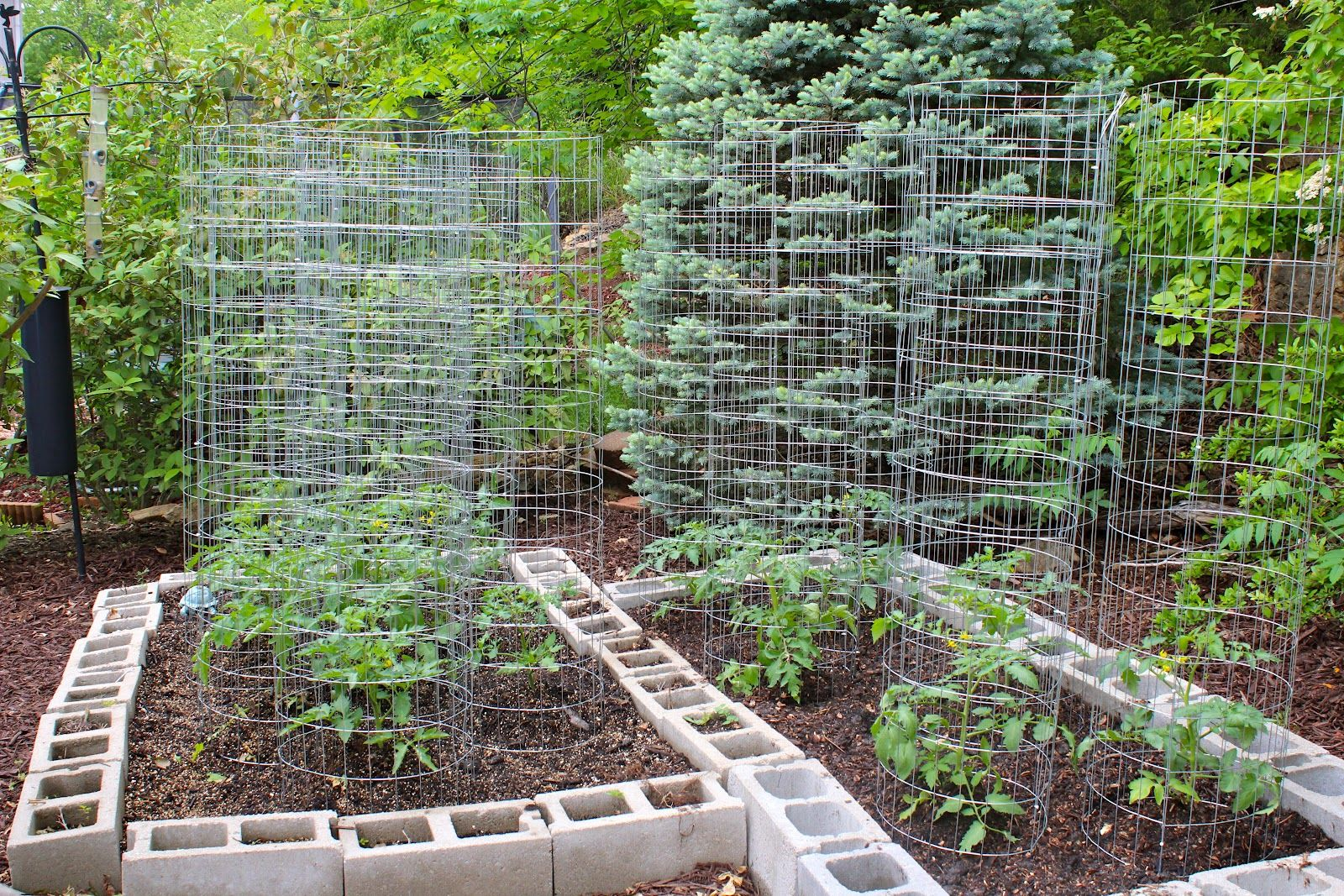 How to Make Your Home Vegetable Garden Look Beautiful | Vegetable ...