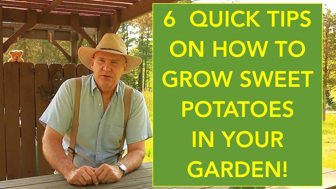 how to sprout potatoes fast