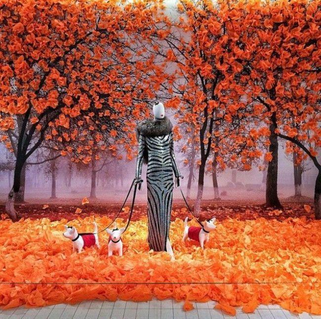 100 лучших идей: красивые витрины на фото   Осенние ...