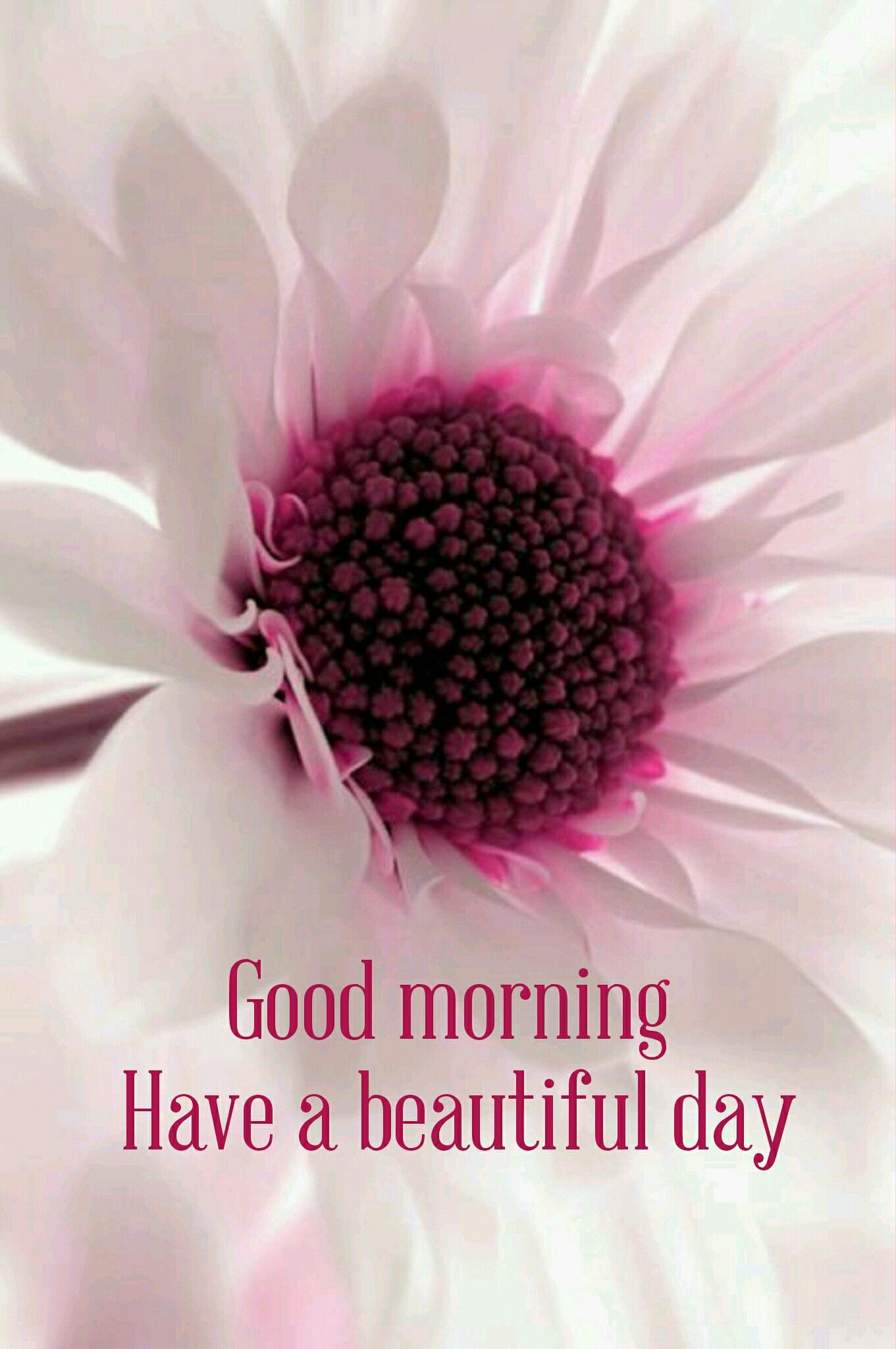 Good Morning Beautiful Flowers Amazing Flowers Pretty Flowers