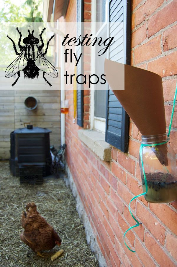 The Best Homemade Fly Trap. And it probably isn't the one