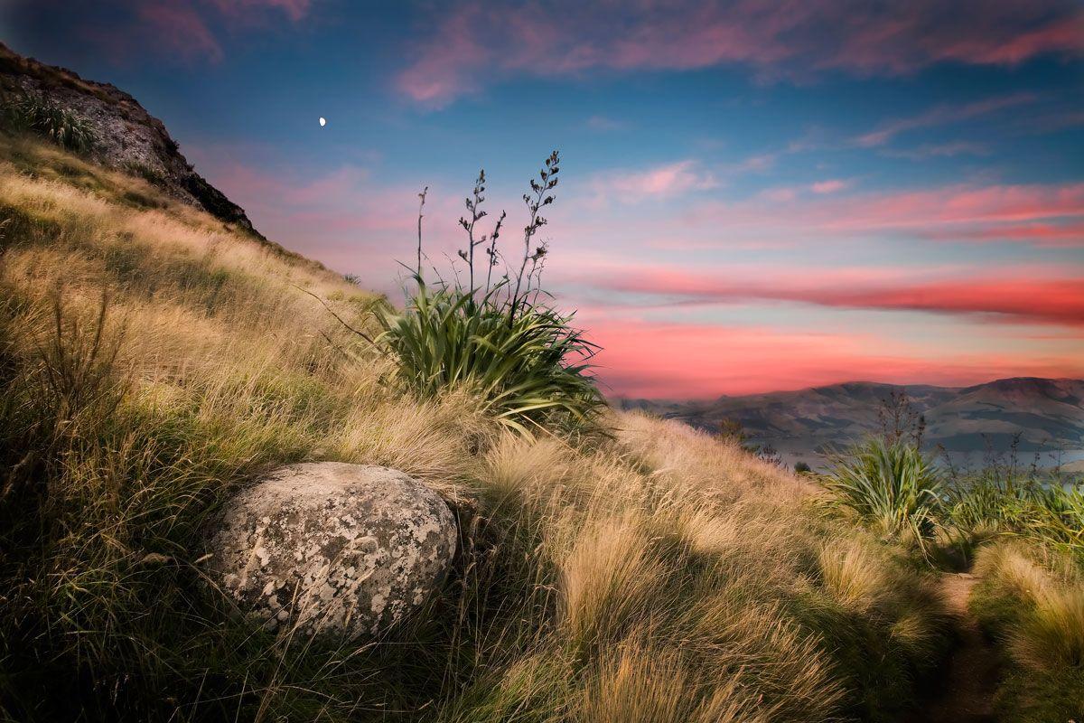 New Zealand flax / Harakeke, Sugar Loaf Hills