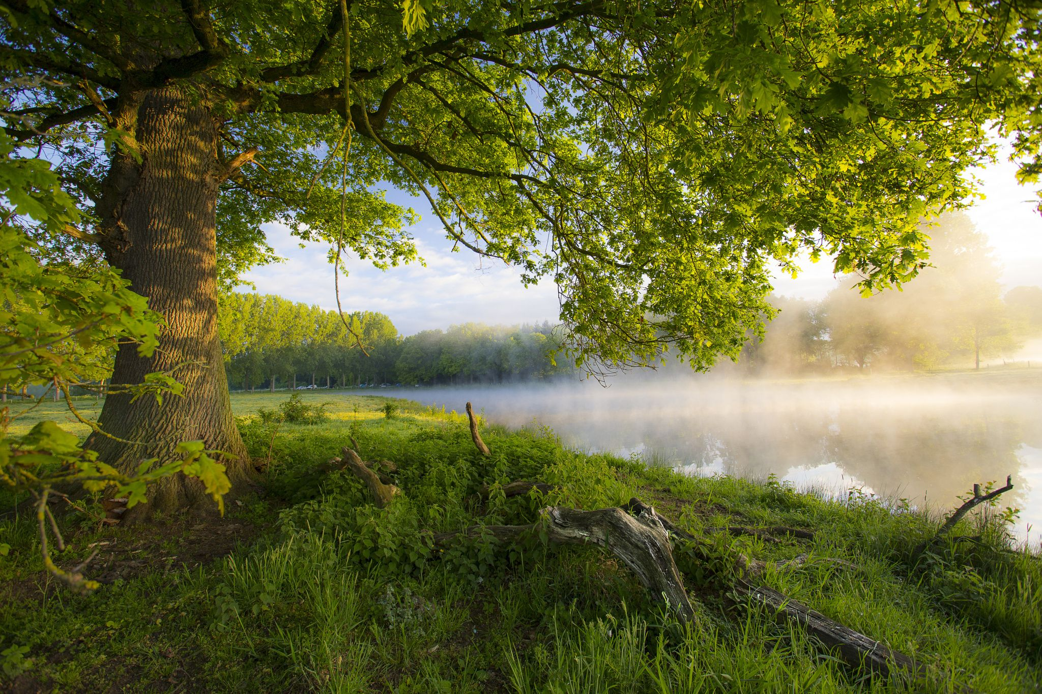 Morning tree by paul poels on 500px