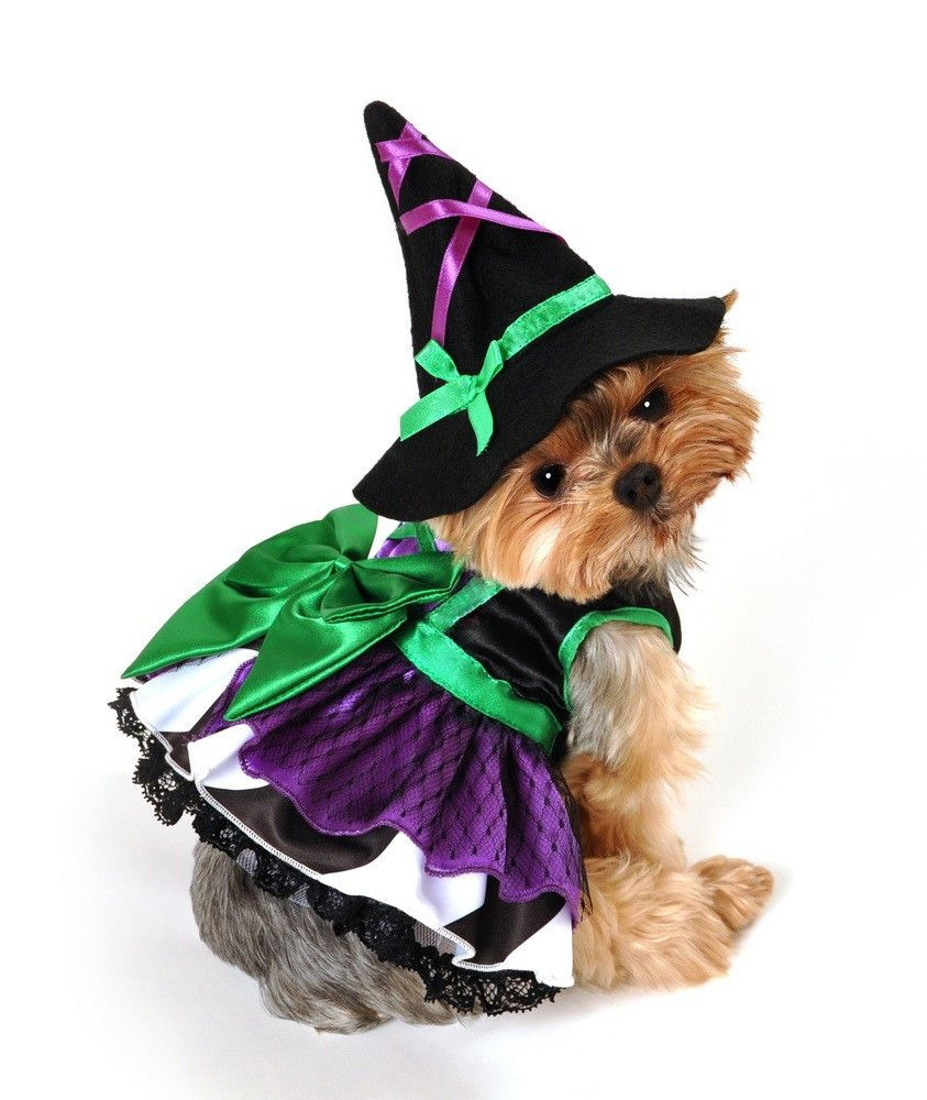 Enchanting Emerald And Purple Witch Dog Costume Dog Witch