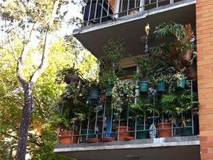 Balcony Gardening   Sustainable Gardening Australia ...