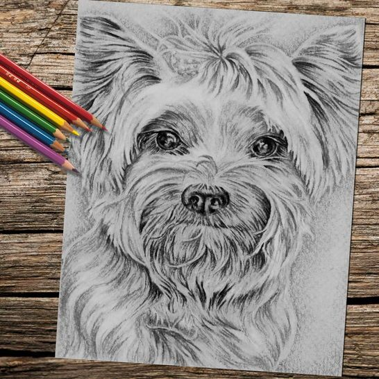 Coloring Page Printable Jpg Yorkie Dog Drawing Dog Coloring Book Dog Coloring Page Grayscale Art