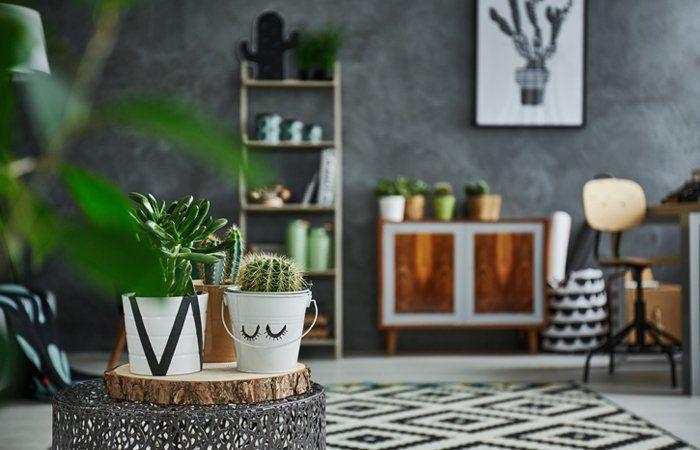 diese zimmerpflanzen bringen farbe in dunkle r ume und verlangen nur wenig licht und kaum wasser. Black Bedroom Furniture Sets. Home Design Ideas