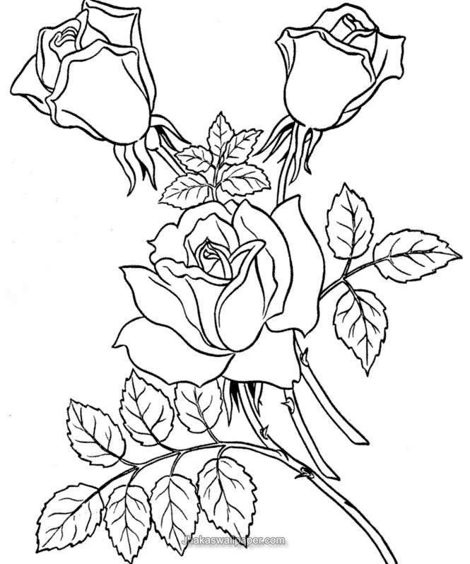 http://jhakaswallpaper.com/printable-rose-flower-coloring-pages ...