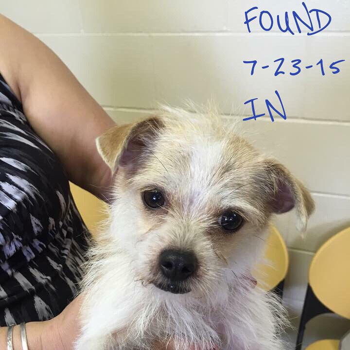 FOUND 72315 Jasper IN DUBOIS COUNTY HUMANE SOCIETY https