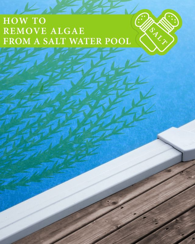 How to remove algae from a salt water pool pool - Saltwater swimming pool maintenance ...