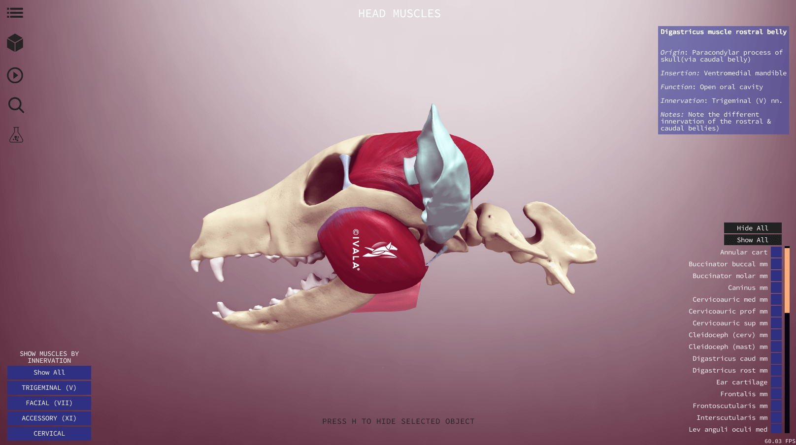 Interactive skull anatomy