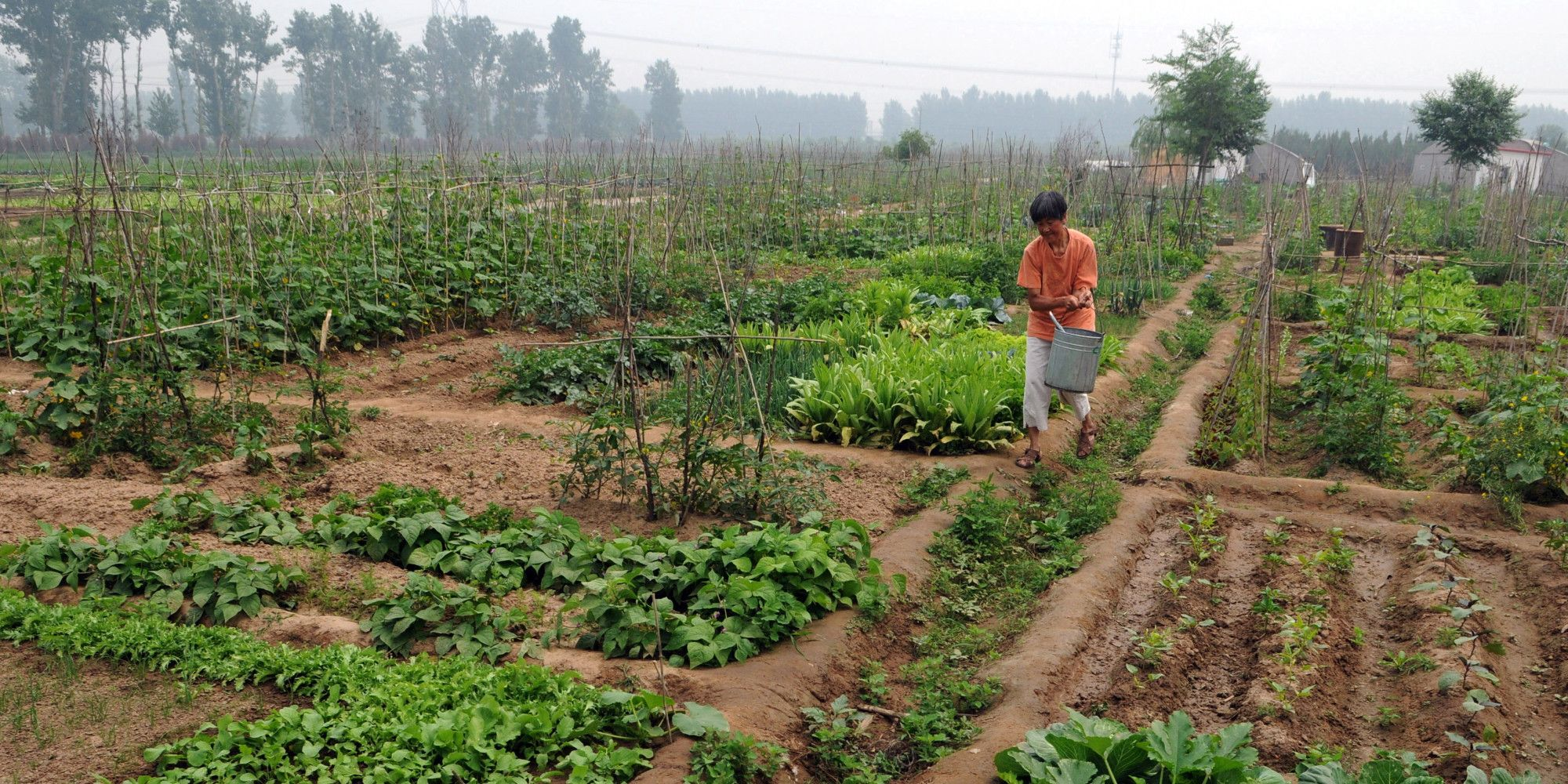 UN Report Says SmallScale Organic Farming Only Way To