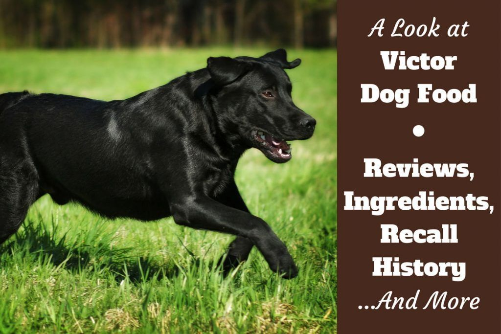 Victor Dog Food Reviews Ingredients Recall History And Our
