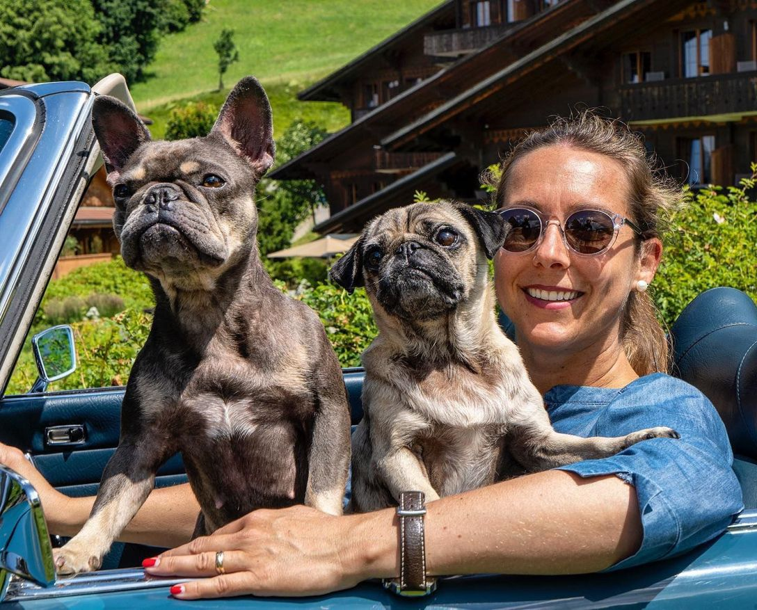 Pin By Huus Gstaad On Team Huus Gstaad French Bulldog Great
