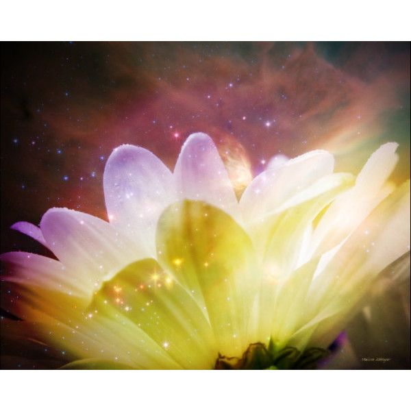 Magical Garden Daisy Fairy Whimsical Fantasy Purple Yellow White ...