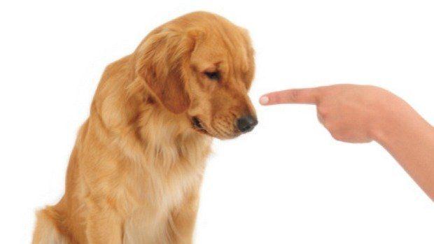Cães entendem as palavras ditas a eles,diz estudo - Ciência - Notícia - VEJA.com