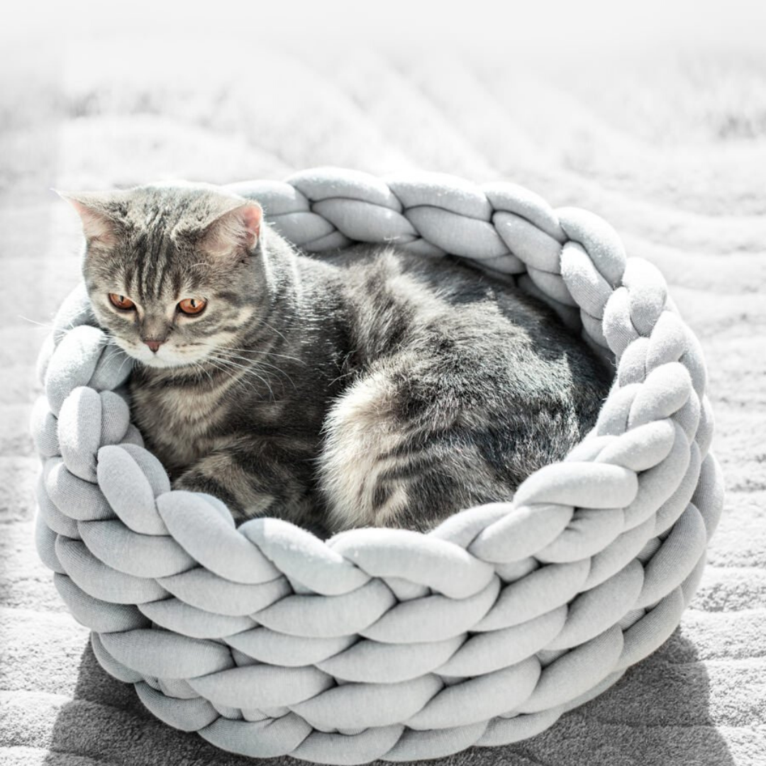 CHUNKY KNIT COTTON PET BED in 2020 Dog pet beds, Puppy