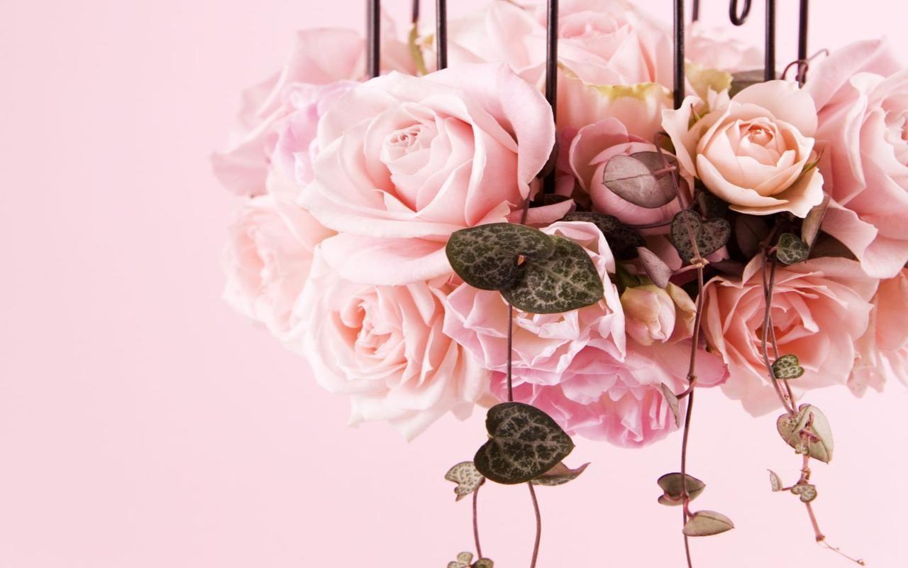 Risultati immagini per rose bianche e rosa sfondo