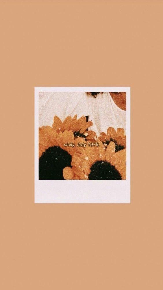 Wallpaper Aesthetic Tumblr Iphone Wallpaper Aesthetic Iphone Tumblr Wallpaper Aesthetic Iphone Wallpaper Iphone Wallpaper Vintage Sunflower Wallpaper