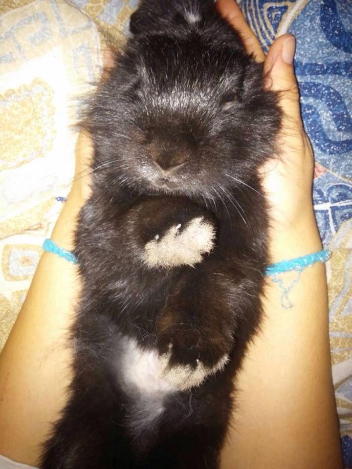 My rabbit gizmo